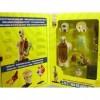Torso Kit Anatomico 32 Pçs - Sk 008 Im
